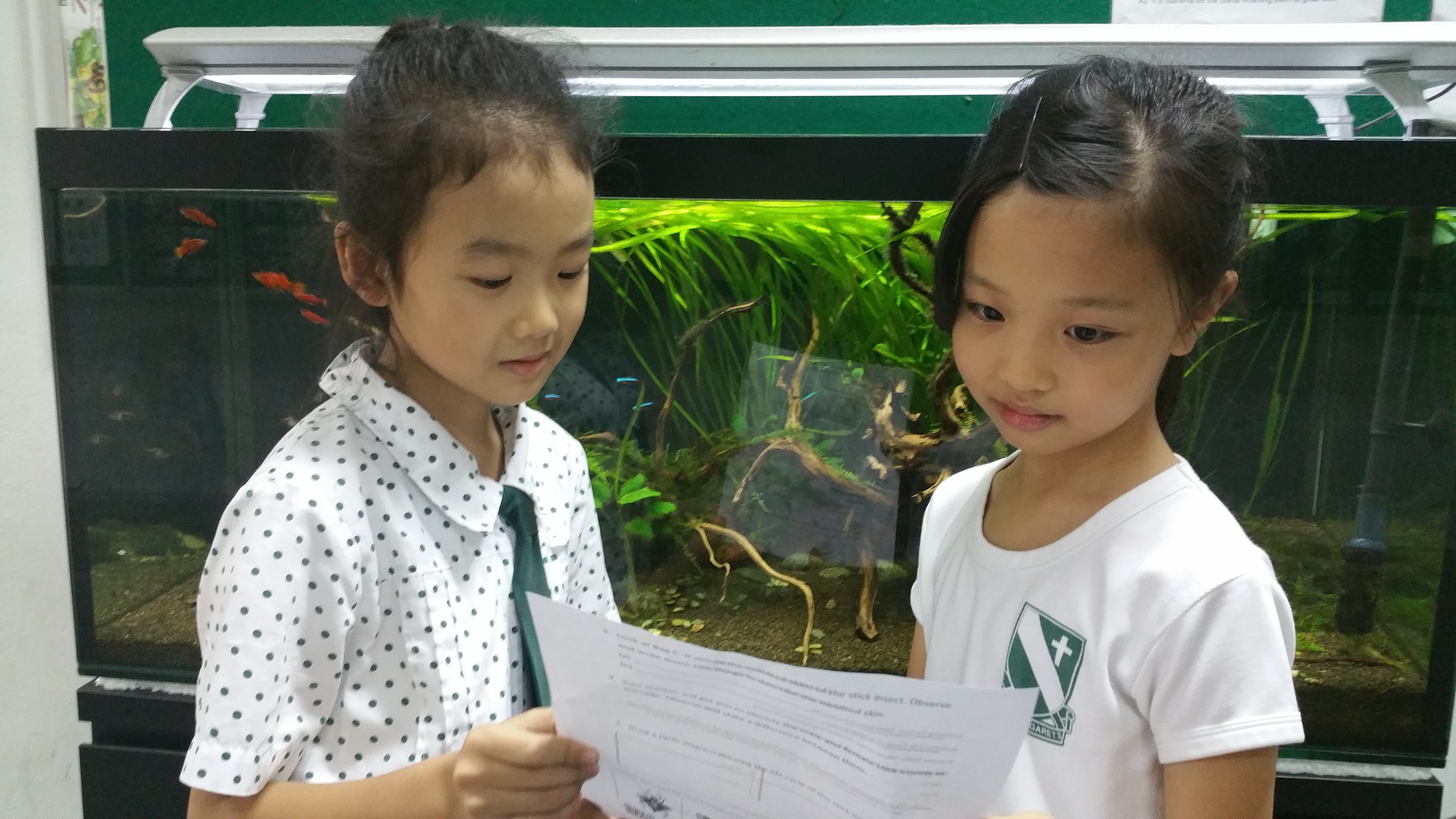 C - Finding out about the organisms in the school aquarium.jpg