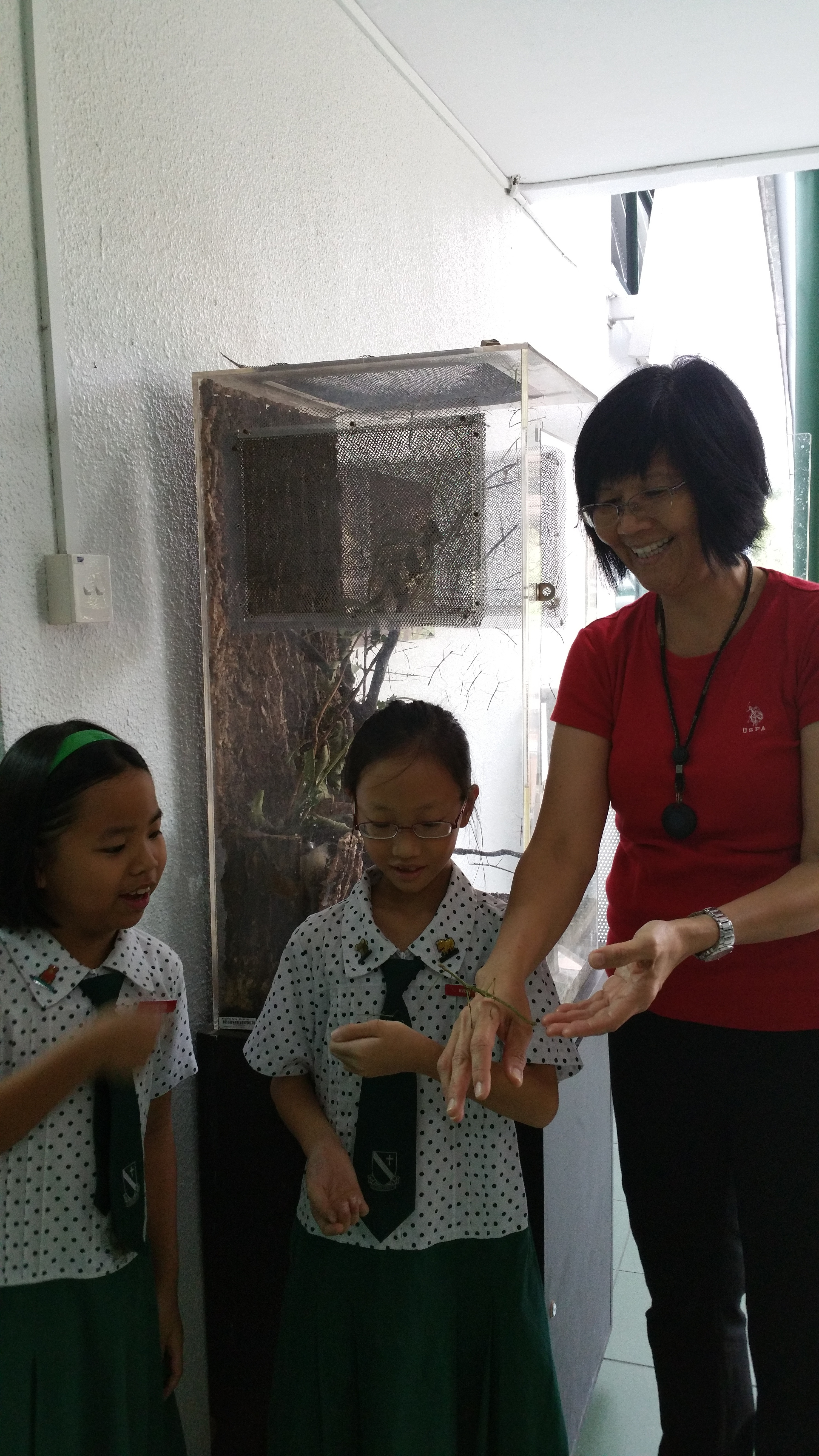 C - Learning about the stick insects.jpg